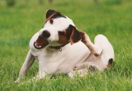 Dicas para prevenir a coceira em cães