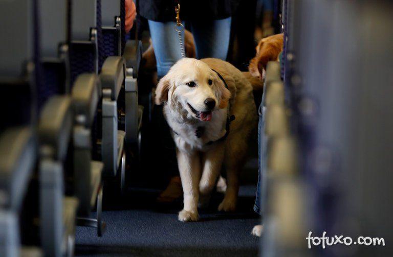 Empresa suspende transporte de cães em avião depois de fatalidade