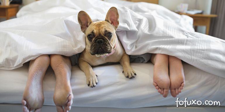 Saiba se é uma boa ideia dormir com o seu cão na cama
