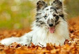 Conheça as doenças mais comuns em pets durante o outono