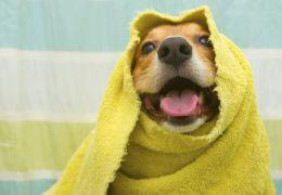 Dicas para um banho seguro nos cães