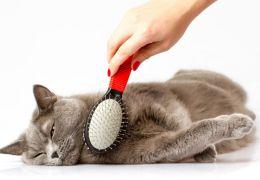 Dicas para cuidar de pelos e unhas de gato