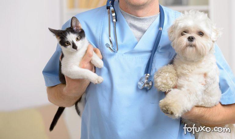 Saiba como escolher um bom veterinário para o seu pet