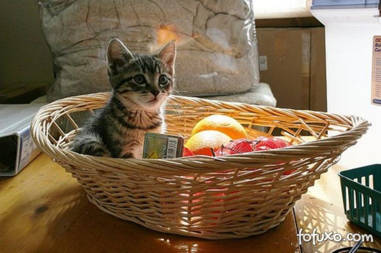 Gatos podem comer frutas?