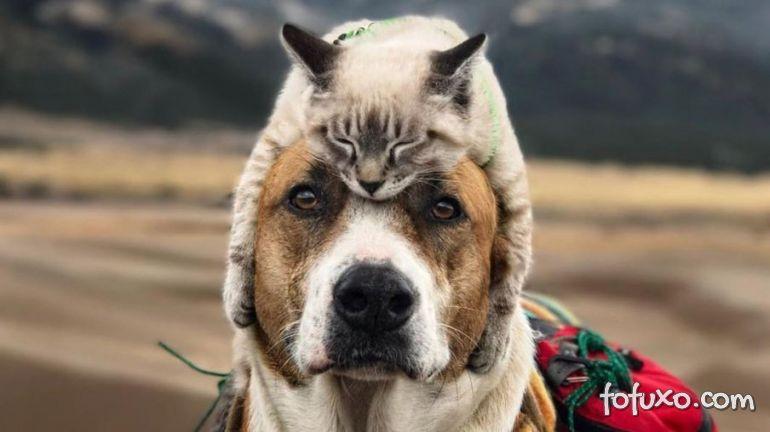 Gato e cachorro viram melhores amigos e viajam juntos