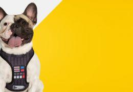 Empresa carioca ganha dinheiro fazendo guias do Darth Vader para cães