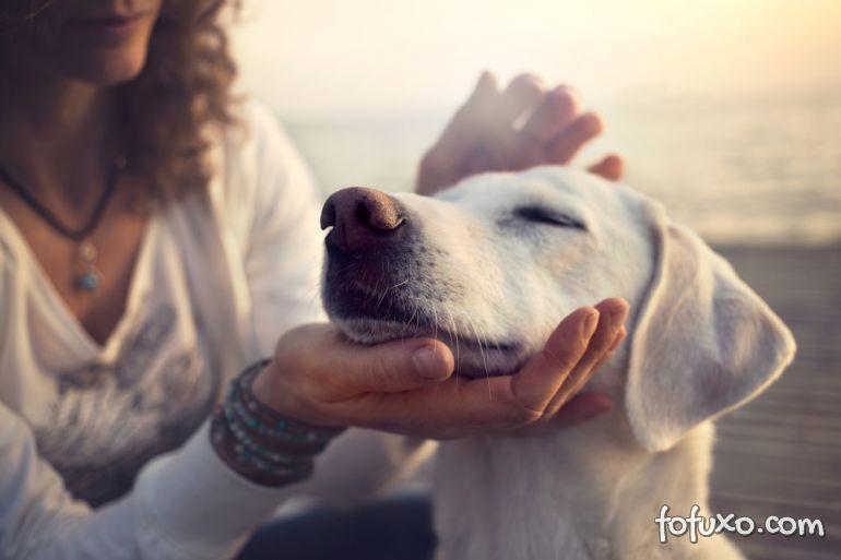 Conheça os benefícios que o Reiki pode trazer aos seus pets