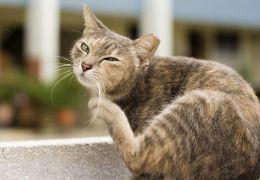 Confira algumas das alergias mais comuns em gatos