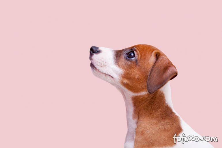 Dicas para acostumar o cachorro com o seu nome