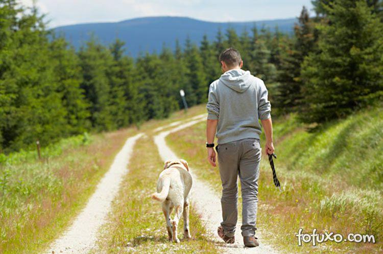 Dicas para passear com o seu cachorro sem coleira
