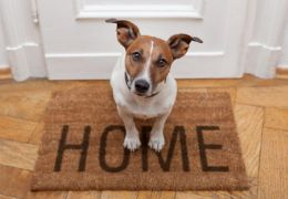 Dicas para preparar sua casa para hospedar um cão