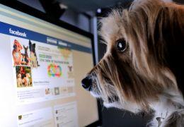 Facebook proíbe venda de animais dentro da plataforma