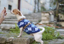 Cachorros e gatos precisam de roupas no inverno?