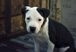 Saiba como tratar o Politraumatismo em cachorros