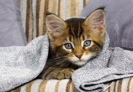Dicas para manter seu gato aquecido durante o inverno