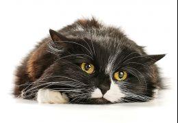 Saiba identificar doenças renais em pets idosos