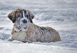 Saiba mais sobre hipotermia em cães