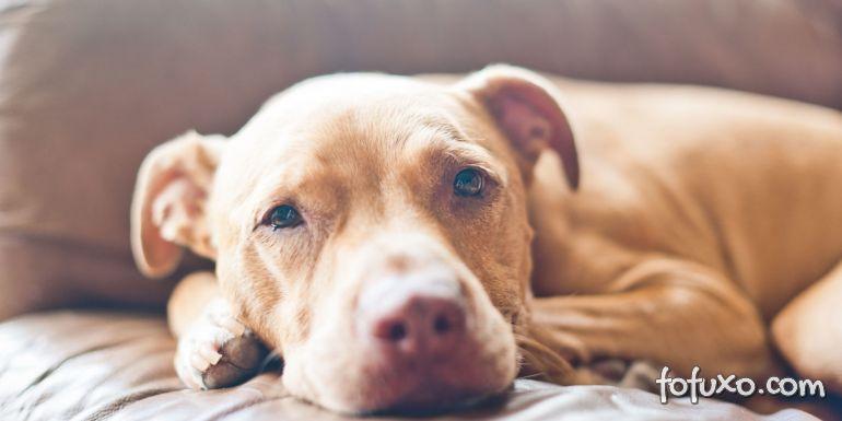Dicas para proteger o cachorro da cinomose