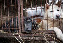 Justiça proíbe matar cachorros para consumo na Coreia do Sul