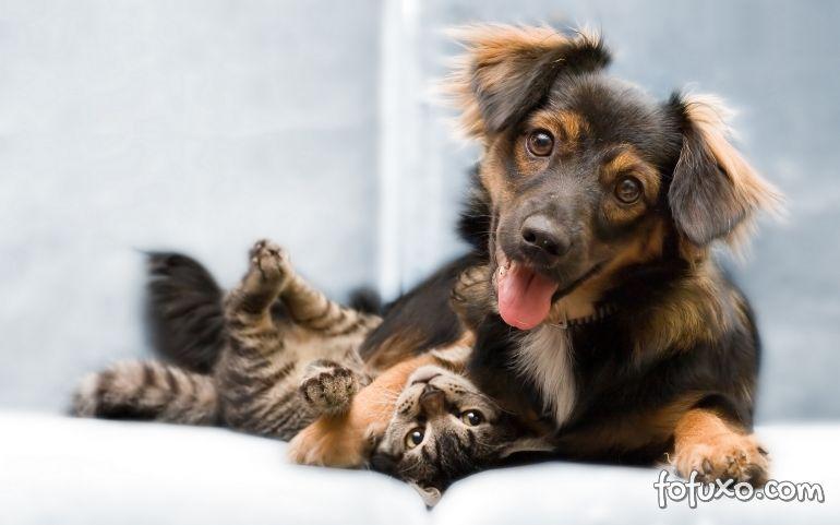 Pesquisa revela semelhanças e diferenças entre tutores de cães e gatos