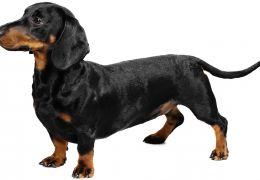 Dicas para tratar e prevenir problemas de colunas em cães