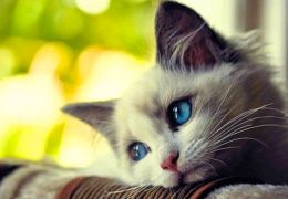Confira os 8 alimentos mais perigosos para os gatos