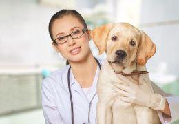 Belo Horizonte vai ganhar primeiro hospital público veterinário