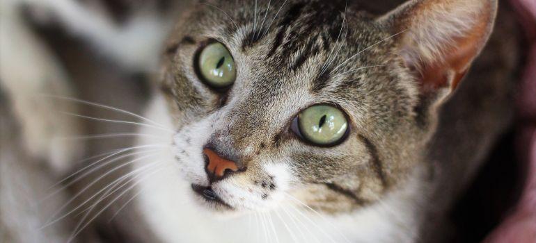 Feira traz dia especial para Campanha de Adoção de animais