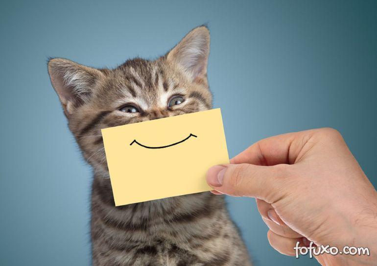 Saiba tudo sobre vitaminas para gatos