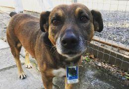 Cachorro vira gerente de estacionamento no Rio Grande do Sul