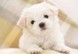 Saiba qual é a média mensal de gastos para ter um cachorro