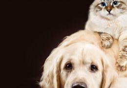 Saiba o que é mito e o que é verdade nas idades dos cães e gatos