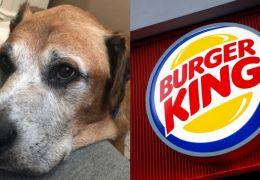 Cachorro com câncer terminal ganha hambúrgueres todos os dias