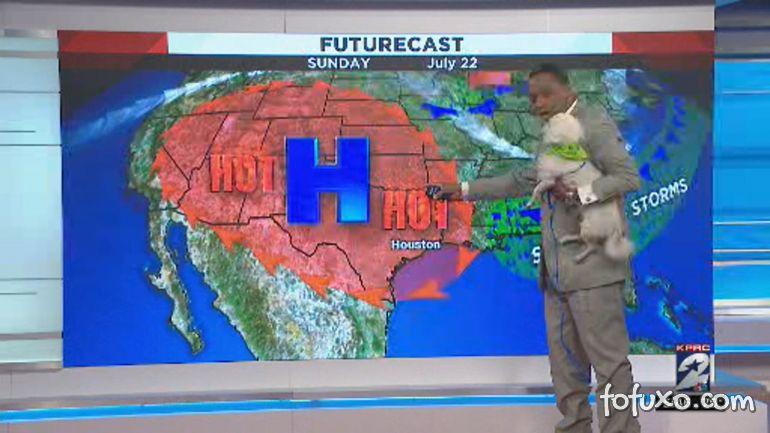 Cachorro invade transmissão de jornal ao vivo