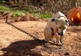 Florianópolis aprova lei que torna crime deixar cachorro acorrentado