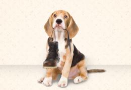 Entenda os motivos que levam os cachorros a destruir sapatos