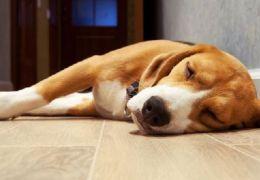 Dicas para prevenir o câncer em cachorros