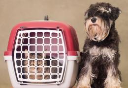 Dicas para escolher uma caixa de transporte para viajar com seu pet
