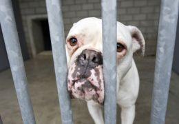 Justiça nega pedido para manter cachorro dentro de apartamento