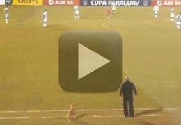 Cachorro vira auxiliar técnico de futebol