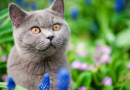 Cidade da Nova Zelândia quer banir todos os gatos
