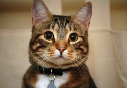 Nome escolhido para o gato pode influenciar em seu comportamento