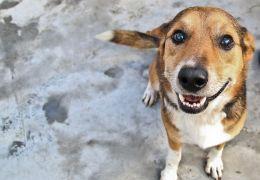 Adotar cachorro adulto traz felicidade no relacionamento