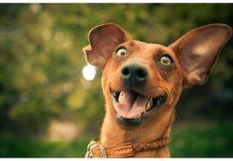 Dicas para deixar o seu cachorro mais feliz