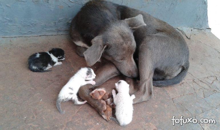 Cachorra adota filhotes de gatos abandonados