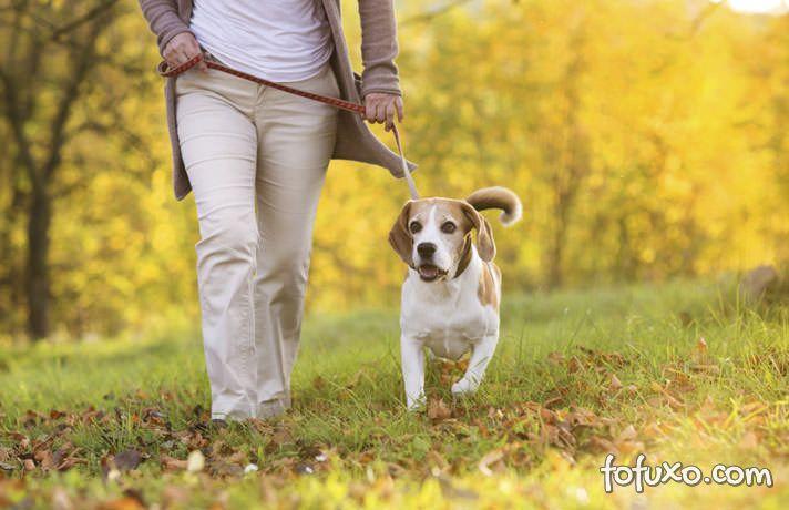 5 Dicas para facilitar o passeio com cachorro
