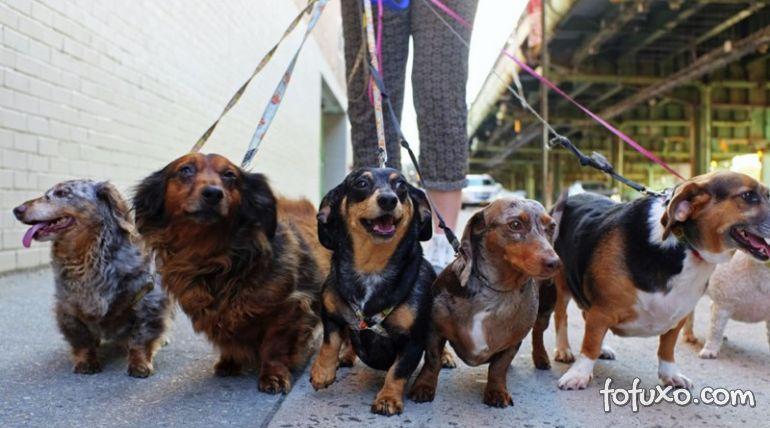 Startup cria plataforma para conectar passeadores e donos de cães