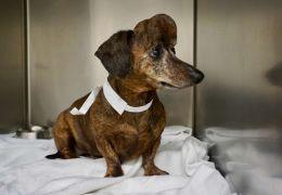 Pesquisadores criam crânio 3D para salvar cachorro com câncer