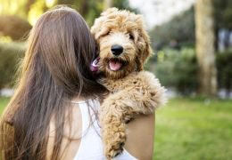 Estudo afirma que pessoas se importam mais com cães do que com outras pessoas