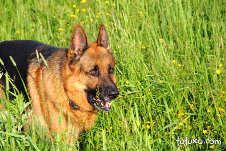 Plantas perigosas: Confira uma lista para proteger seu cachorro
